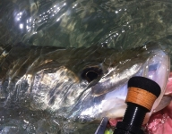 fly-fishing-miami-37