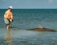 big-bull-shark-fishing-miami
