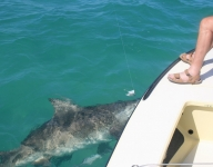 shark-fishing-miami-85