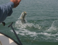 tarpon-fishing-111