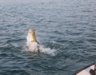 tarpon-fishing-123