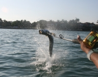 tarpon-fishing-125