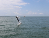 tarpon-fishing-126