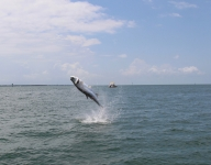 tarpon-fishing-127