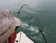 tarpon-fishing-135