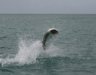 tarpon-fishing-139