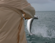 tarpon-fishing-140