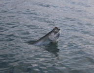 tarpon-fishing-146