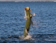 tarpon-fishing-157