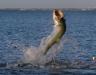 tarpon-fishing-158