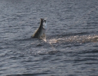 tarpon-fishing-160