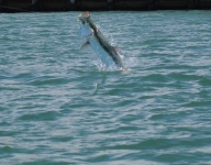 tarpon-fishing-162