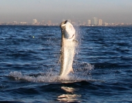 tarpon-fishing-170