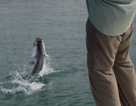 tarpon-fishing-183