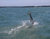 tarpon-fishing-197