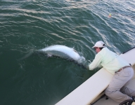 tarpon-fishing-223