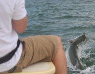tarpon-fishing-235