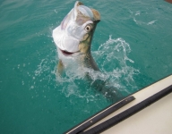 tarpon-fishing-254