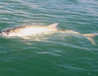 tarpon-fishing-261