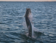 tarpon-fishing-269
