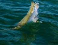 tarpon-fishing-27