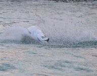 tarpon-fishing-278