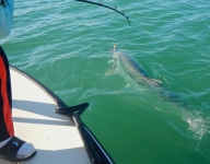 tarpon-fishing-280