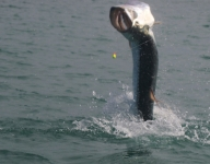 tarpon-fishing-285