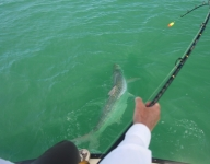 tarpon-fishing-287