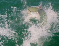 tarpon-fishing-289