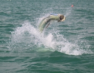 tarpon-fishing-294