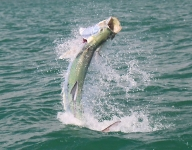 tarpon-fishing-309