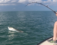 tarpon-fishing-330