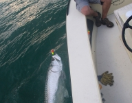 tarpon-fishing-331