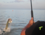 tarpon-fishing-335