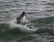 tarpon-fishing-353