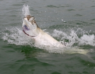 tarpon-fishing-358