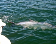 tarpon-fishing-363