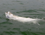 tarpon-fishing-374