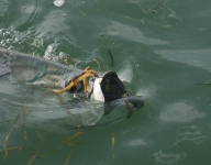 tarpon-fishing-41