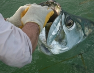 tarpon-fishing-44