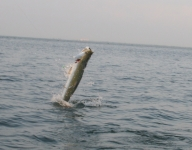 tarpon-fishing-55
