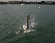 tarpon-fishing-56
