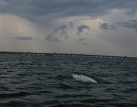 tarpon-fishing-60
