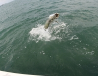 tarpon-fishing-68