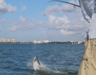 fly-fishing-miami-63
