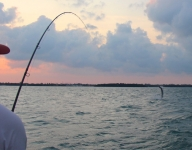 fly-fishing-miami-71