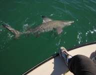 shark-fishing-12