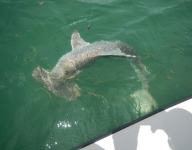 shark-fishing-miami-88