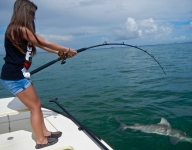 small-bull-shark-fishing-miami